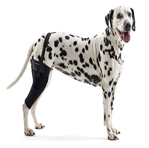 Kruuse-Rehab-Knee-Protector-For-Dogs